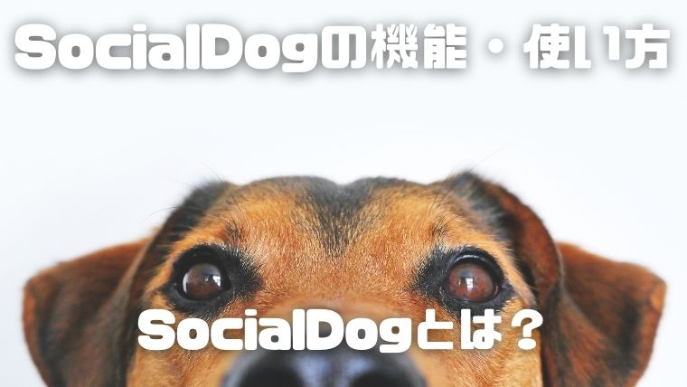 SocialDogの機能を全て紹介_SocialDogとは?